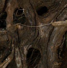 Wild Wood on Hartland Heath